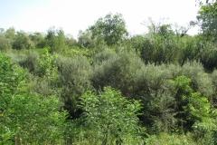 Particolare-dell'alveo-con-vegetazione-arbustiva-Foto di A. Stravisi