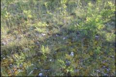 Formazione-magredile-primitiva-lungo-il-corso-del-Torre.-Foto-L.-Pellizzari