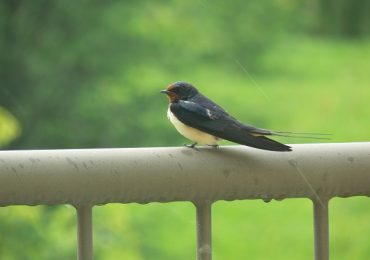 Tutti gli Uccelli del Parco